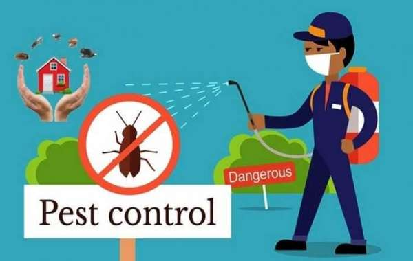 Is It Safe to Stay Home After Pest Control?